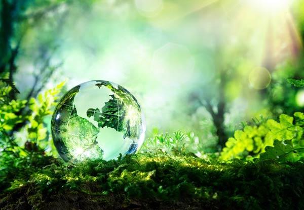 Mês do Meio Ambiente