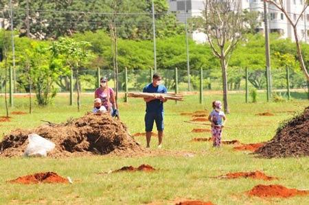 Brasília terá corredor ecológico para ajudar a preservar abelhas